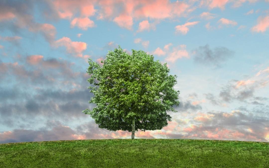 Energia drzew – warsztaty rozwojowe dla kobiet